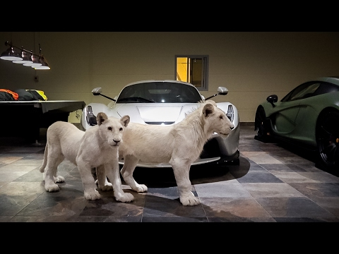 White Lion, White Laferrari