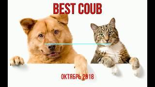 Лучшие приколы Coub с животными октябрь 2018/Best animal videos Coub October 2018