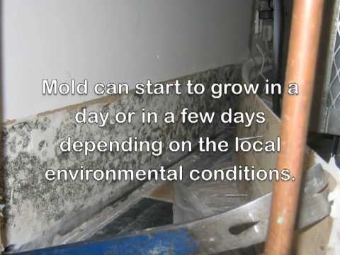 How to Dry out water damage, leaks, floods with dehumidifiers and cleanup mold with airscrubbers