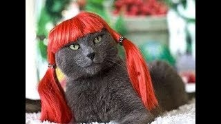 Cat.Смешные коты и кошки.Кэт.