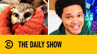 Tiny Owl Found Hiding In New York Christmas Tree | The Daily Show With Trevor Noah