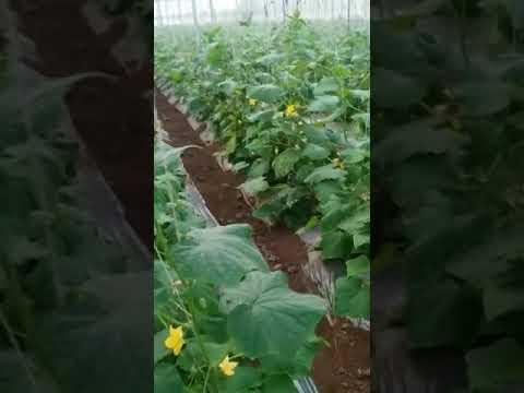 Crop Support Net