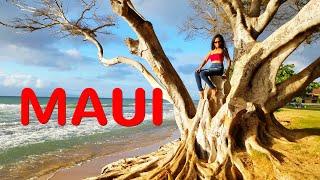 MAUI VACATION 4K (ULTRA HD) Westin Maui Resort And Spa
