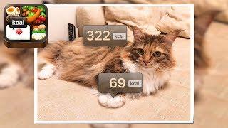弁当アプリで猫を撮影したら何になる?www