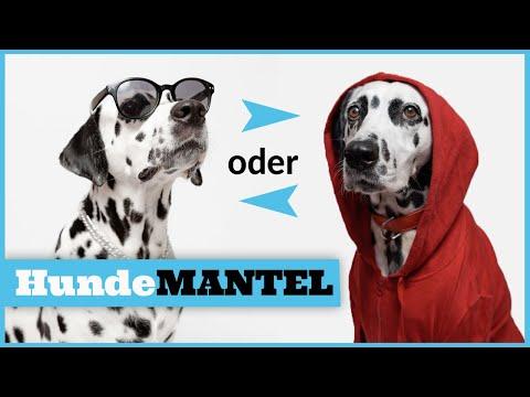 Hund im Winter / Braucht der Hund einen Wintermantel ? / Den richtigen Hundemantel finden