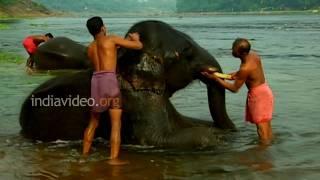 Rhapsody in Tropics, Kerala