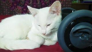 Смотреть онлайн АСМР: Звуки мурлыкающей кошки