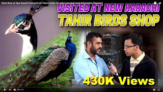 Birds Shop at New Karachi Peacock hen Parrot teeter for sale (Jamshed Asmi Informative Channel )