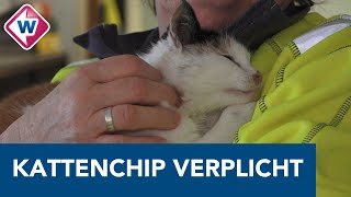 Chippen van je kat verplicht in Alphen: 'Het neemt een hoop zorg weg' - OMROEP WEST
