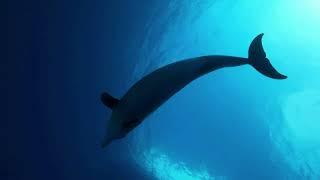 ZANZIBAR - VACATION - TRIP - Simma Med Delfiner