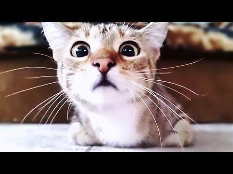 Pisicile şi fricile lor