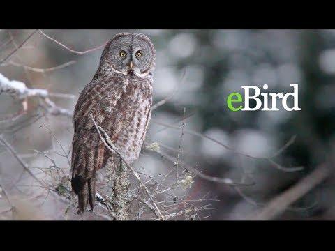 Plataforma mundial para el avistamiento de aves ayuda a la conservación