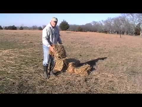 Come trattare il toro per le articolazioni