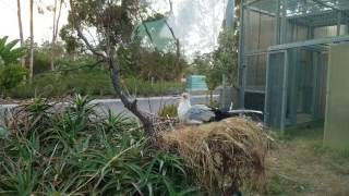 Secretarybird at San Diego Zoo