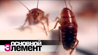Домашние паразиты