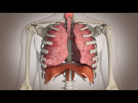 El cinturón para el adelgazamiento del vientre ab gymnic las revocaciones de la foto