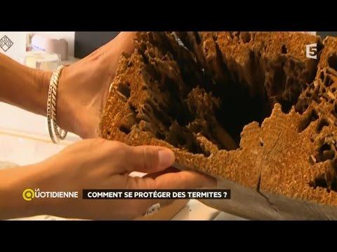 Les helminthes dans lexcrément de lenfant le traitement