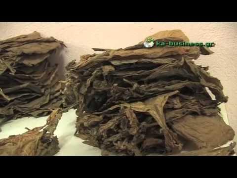 Εργαστήριο κατασσκευής πούρων στην Ελλάδα (μέρος 2ο)