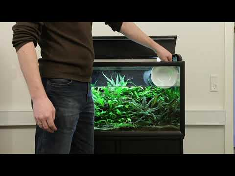 Le microorganisme végétal sur les pieds et le corps