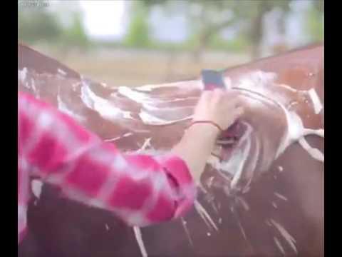 Como quitarle el cabello a un caballo