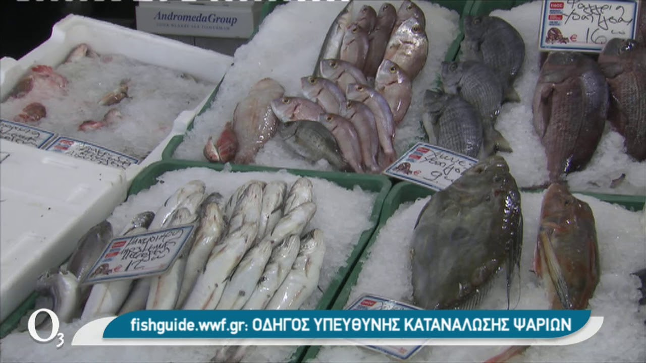 H υπεραλίευση απειλεί τη Μεσόγειο  | 14/01/2021 | ΕΡΤ