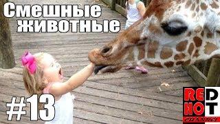 Смешные животные #13 Видео приколы с животными 2018