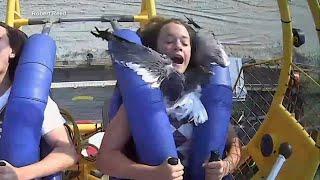 На аттракционе чайка врезалась в лицо девушке (видео)