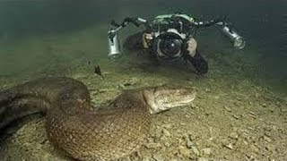 Anaconda le serpent roi des reptiles documentaire en français n
