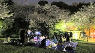 花見と日本酒と東京キャンプとぐるなび