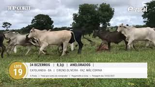 34 BEZERROS ANELORADOS