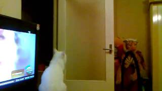 Cat jumps very high