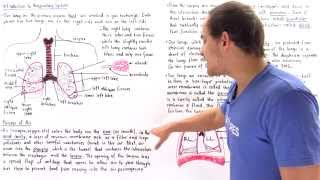 Introduction to Human Respiratory System