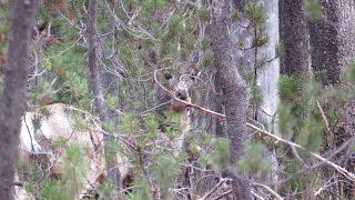 Hunter Terrified By Bigfoot At Deadwood