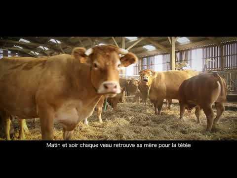 Le Veau d'Aveyron et du Ségala, des Hommes, un territoire, un produit,