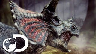 The Toughest Of All Dinosaurs: The Triceratops | Clash Of The Dinosaurs
