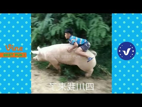 Funny Videos 2017 ● People doing stupid things P50