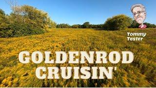 FPV Reptile Cloud Cinewhoop | Gopro Hero 8 + Reelsteady GO | Goldenrod Field Cruising
