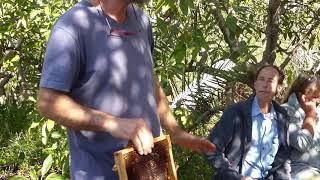 Gesunde Bienen durch natürliche Pflege
