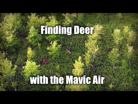 finding-deer-with-the-mavic-air