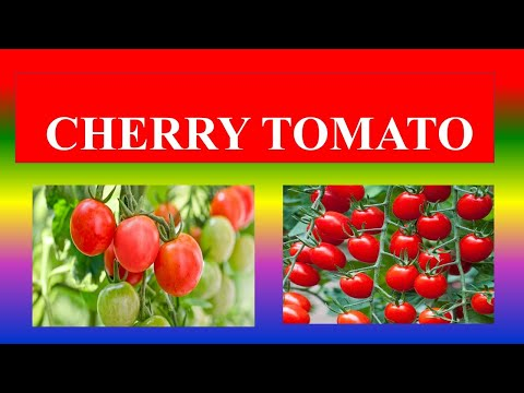 , title : 'CHERRY TOMATO - HEALTH BENEFITS AND NUTRIENT  FACTS