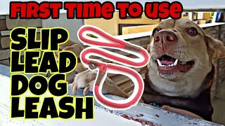 How to Control Dog using Slip Lead Leash - Effective ba? First Impression Review (Tagalog)