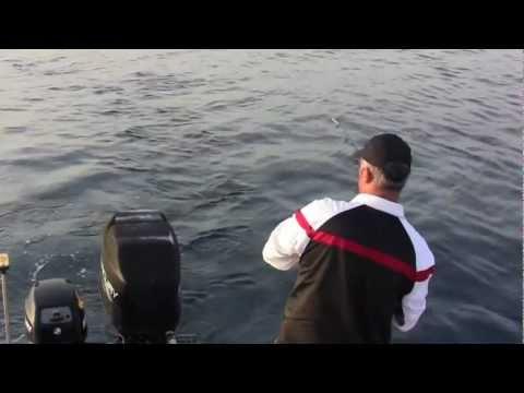 La pesca comè migliore per prendere un abramide comune