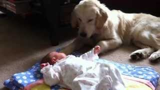 Собаки охраняют детей Подборка Топ 7