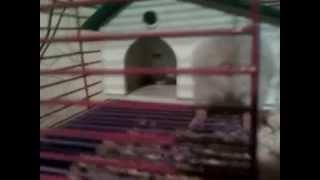 My Edited Video Влюбленные Хомячки!!!!