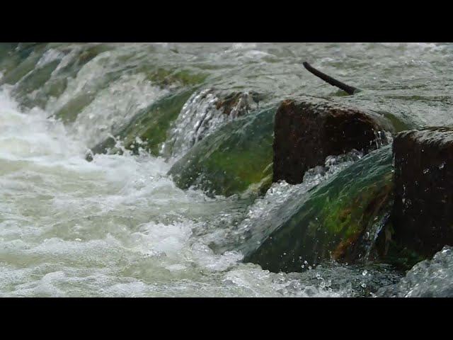 Еловский пруд обмелел
