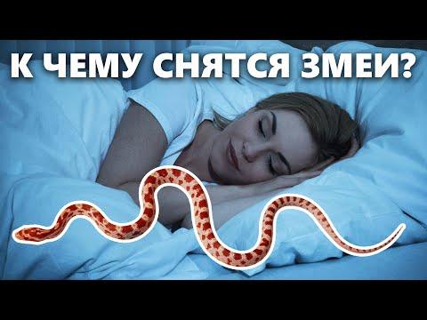 К чему снится змея и что значит видеть змею во сне