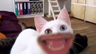 Ржачные кошки с человеческим лицом