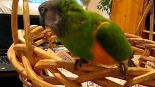Kiwi says hello
