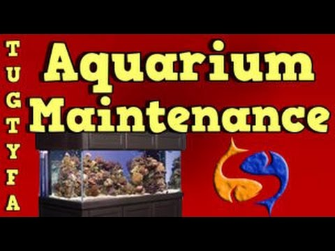 Aquarium Maintenance! The Ultimate Guide To Your First Aquarium Part 10