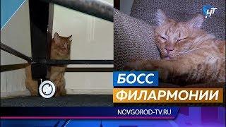 В новгородской филармонии появился Босс